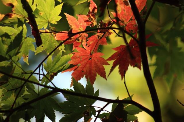 裏磐梯 小野川と紅葉