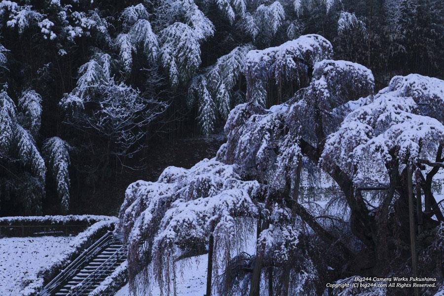 2030411_滝桜