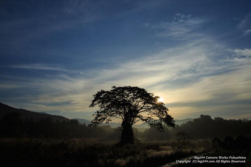 20130921_胡桃の木