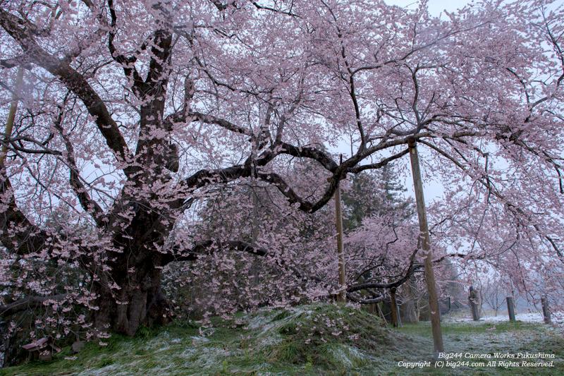 20140406_戸津辺の桜01