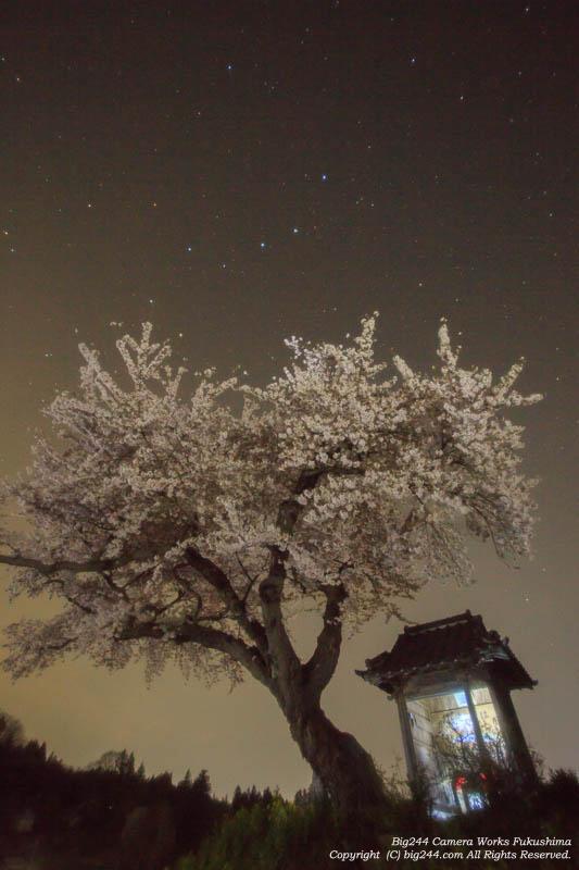 20140427_小沢の桜02