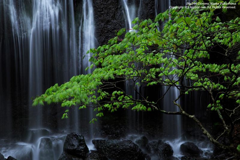 20140517_達沢の新緑