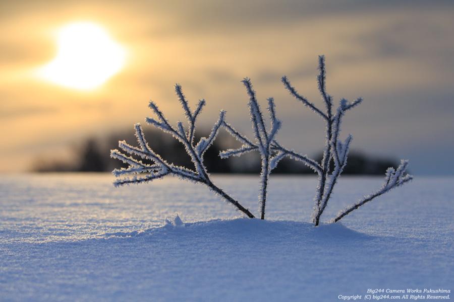 20150208_細野霧氷
