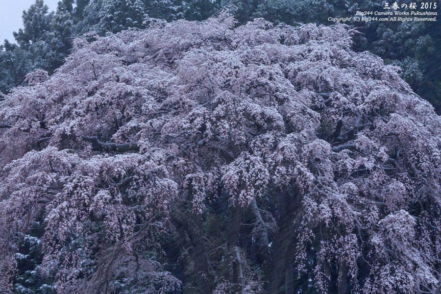 20150408_内出の桜02-西田町