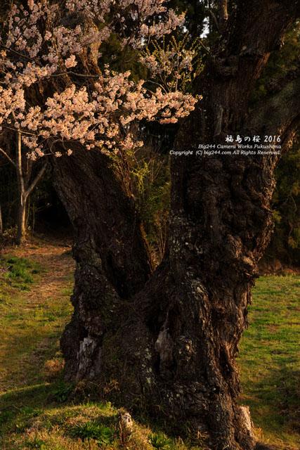 2016-04-13_田村市-曲山の桜01