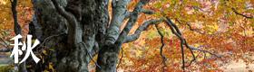 秋のギャラリー