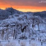 2017-01-13_雪の滝桜-滝桜ブログ03