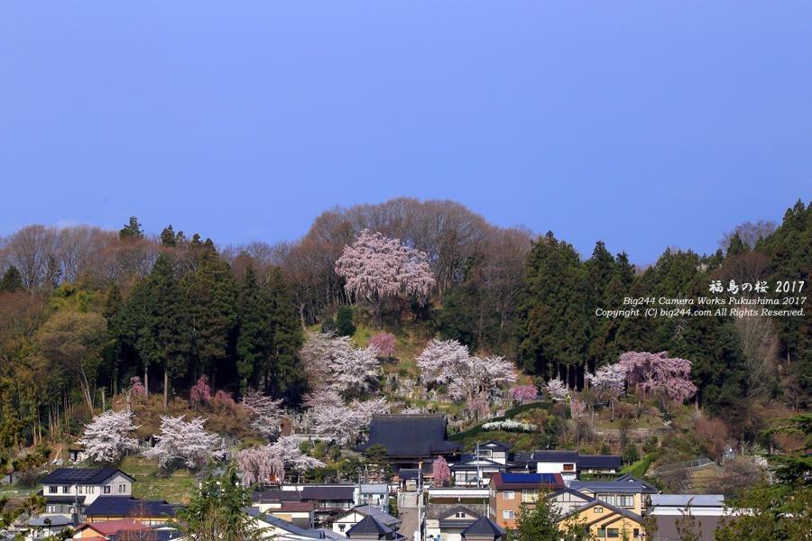 法蔵寺 三春の桜
