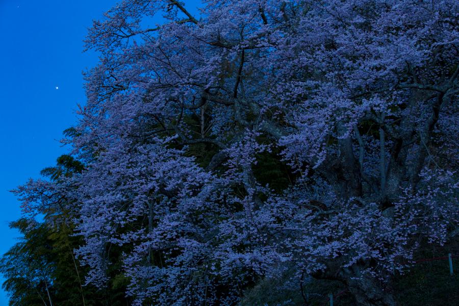 2018-04-14_田村市-是哉寺地蔵桜-01