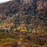 2018-10-20_スカイライン鷲倉温泉から紅葉