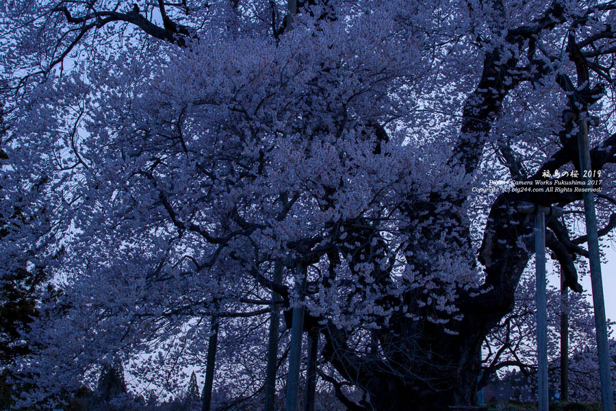 2019-04-06_戸津辺の桜-矢祭町01