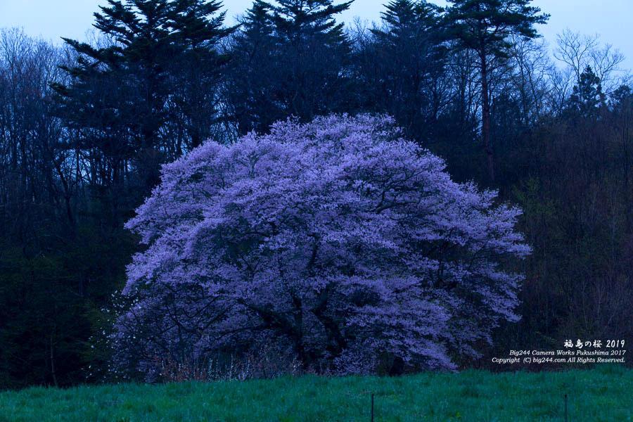 2019-04-27_谷地の桜-小野町01