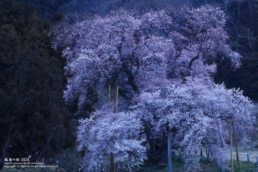 2020-03-26_矢祭町-戸津辺の桜